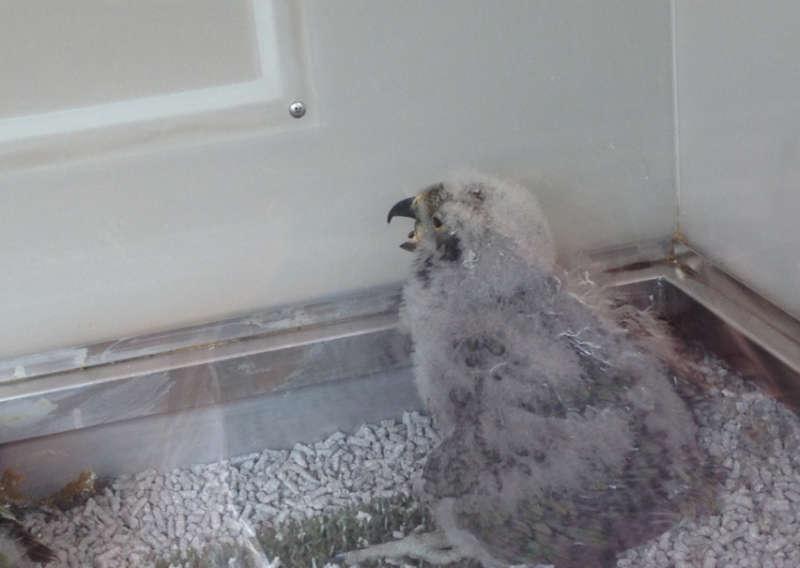 Das Vogel-Baby ist gewachsen