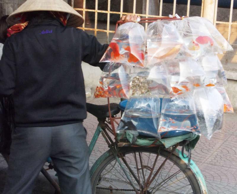 Fische auf Fahrrad