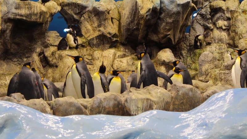 Die Pinguine-Kolonie